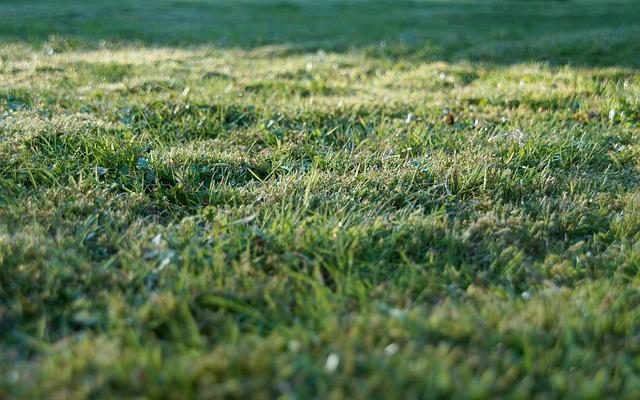 Keeping your garden grass green